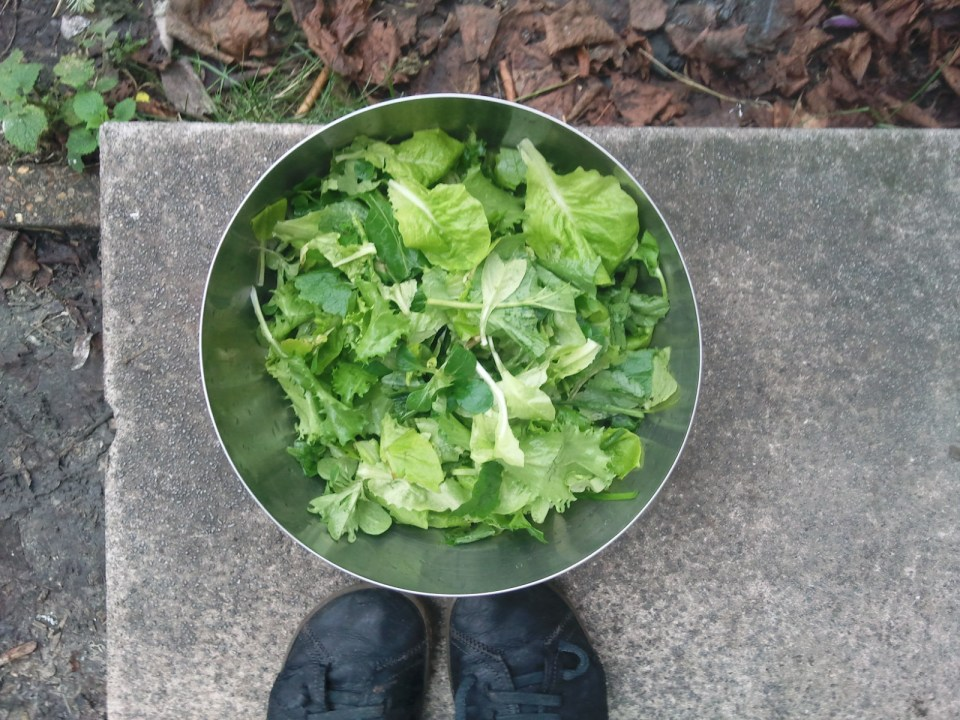Winter salad!