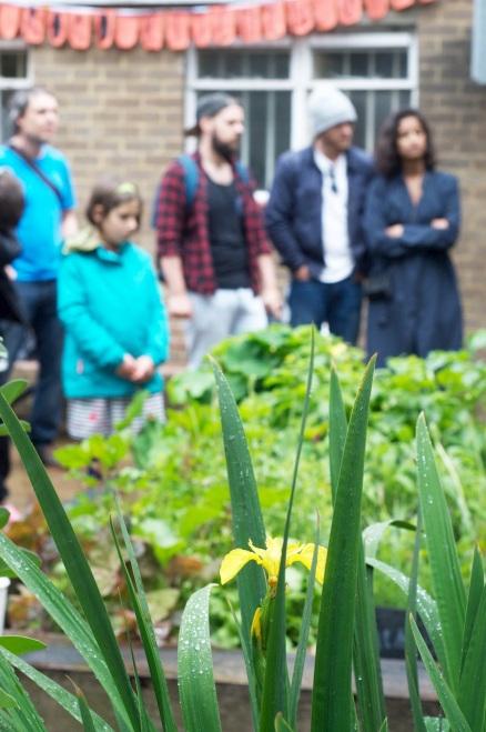 Rainy irises